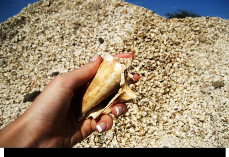 Hitta hela stora vita snäckor Kap Verde Sal Gratis aktiviteter och sevärdheter La Palmeira & Santa Maria