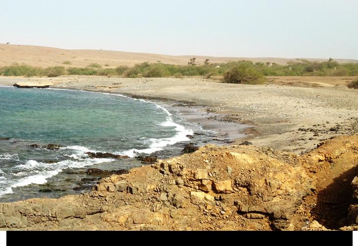 Info & fakta om Fontona, en grön oas mitt i Sals karga öken, Kap Verde öarna. Öde privat strand, en grön djungel med gömd by, färgglada exotiska gräshoppor.