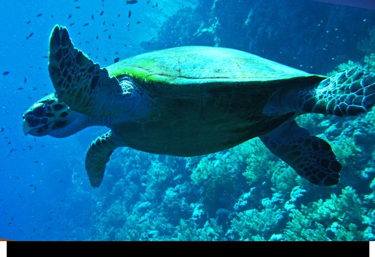 Dykning & snorkling på Kap Verde öarna & Sal