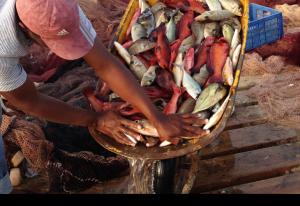 Fiska på Kap Verde öarna, fiskeställen från land & storhavsfiske