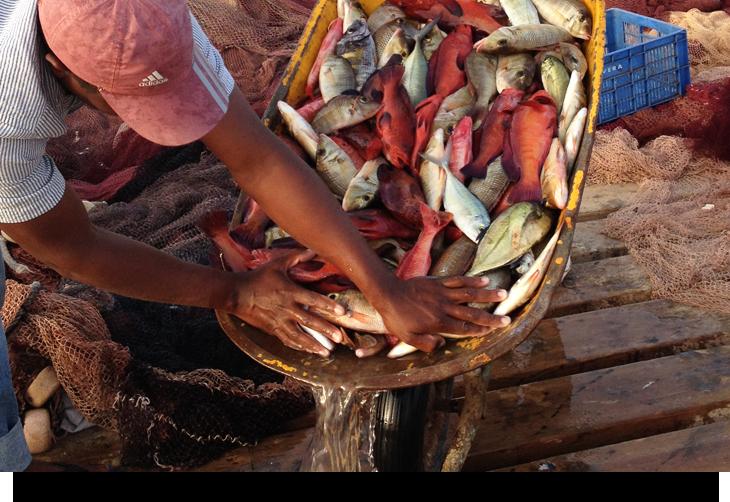 Fiska på Kap Verde öarna. Fiskeställen från land & storhavsfiske med tonfisk wahoo makrill haj dorado mm.