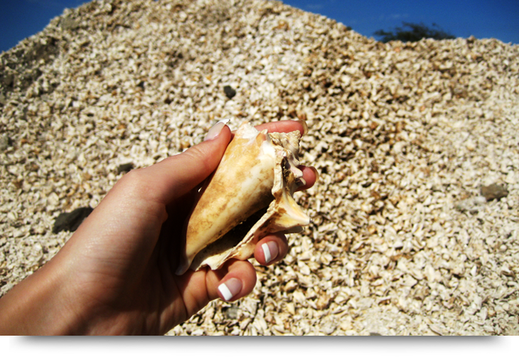 Hidden treasures. Find a conch shell, Sal Cape Verde islands info and facts, Palmeira